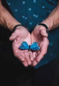 butterfly-art-blog-17e