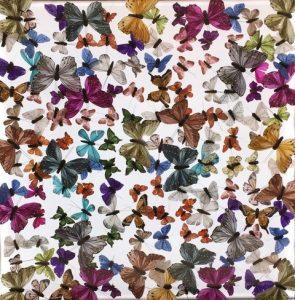 butterfly art blog 19