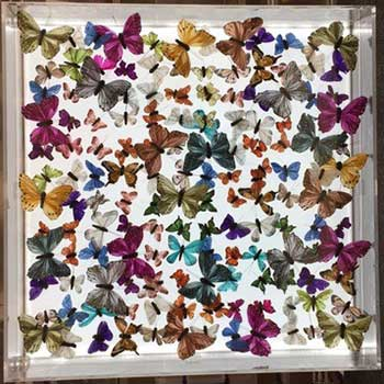 butterfly-art-whats-new-5