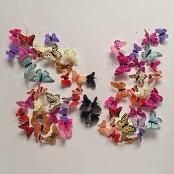 butterfly art whats new