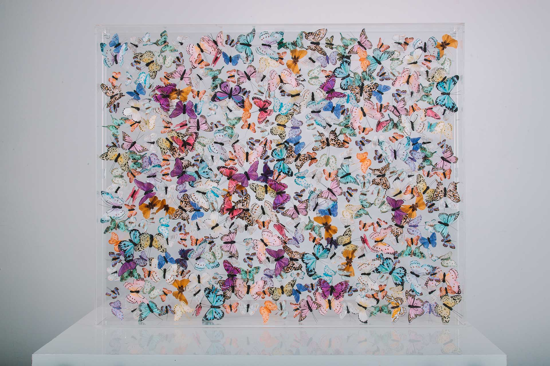 Butterfly Art Gallery