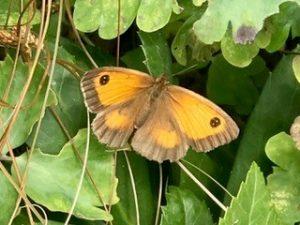 butterfly-art-blog-44a