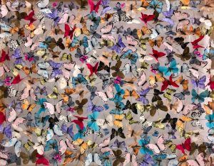 Butterfly Artwork image