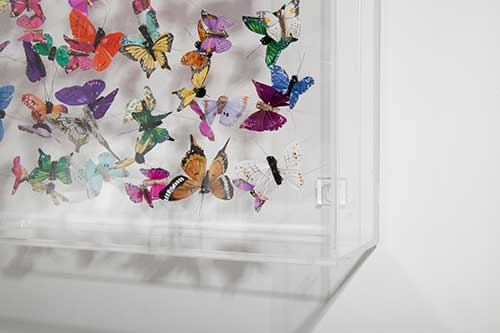 A detail of Butterflies in their case