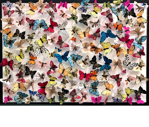 black frame of butterflies