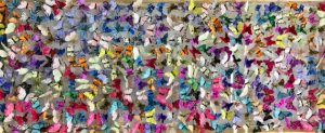 large frame of butterflies