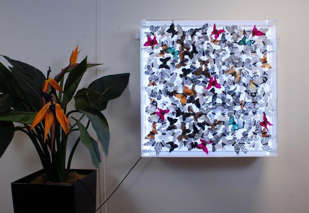 butterfly-Art-Light-Up-photo