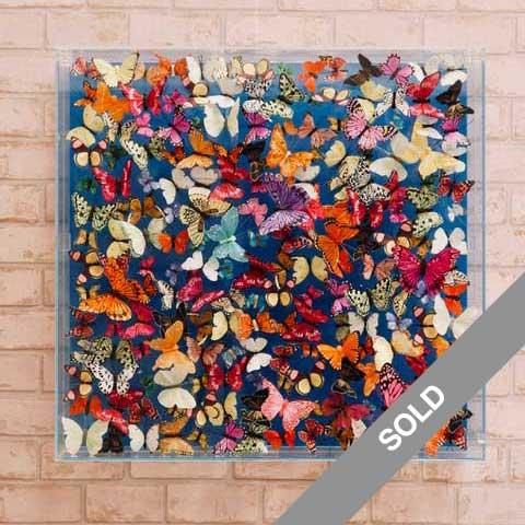 Adonis Blue Butterfly Art