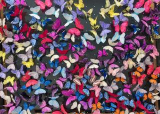Butterfly Art Work in progress