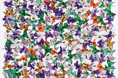 Butterflies-Icarus
