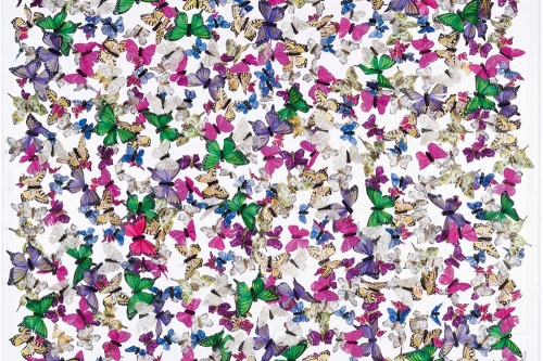 Butterflies-Serenity