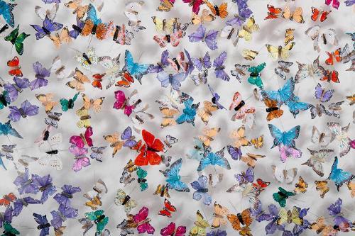 Butterfly-art-113
