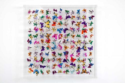 Butterfly-art-121