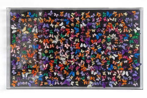 Butterfly-art-125
