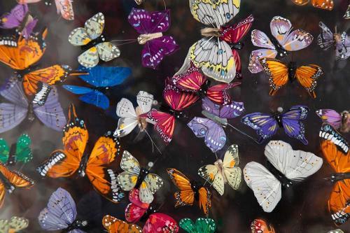 Butterfly-art-138