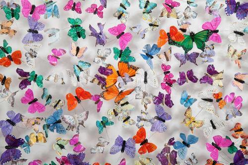 Butterfly-art-40