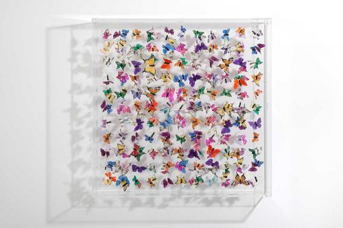 Butterfly-art-88